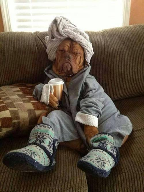dog in a dressing gown and towel